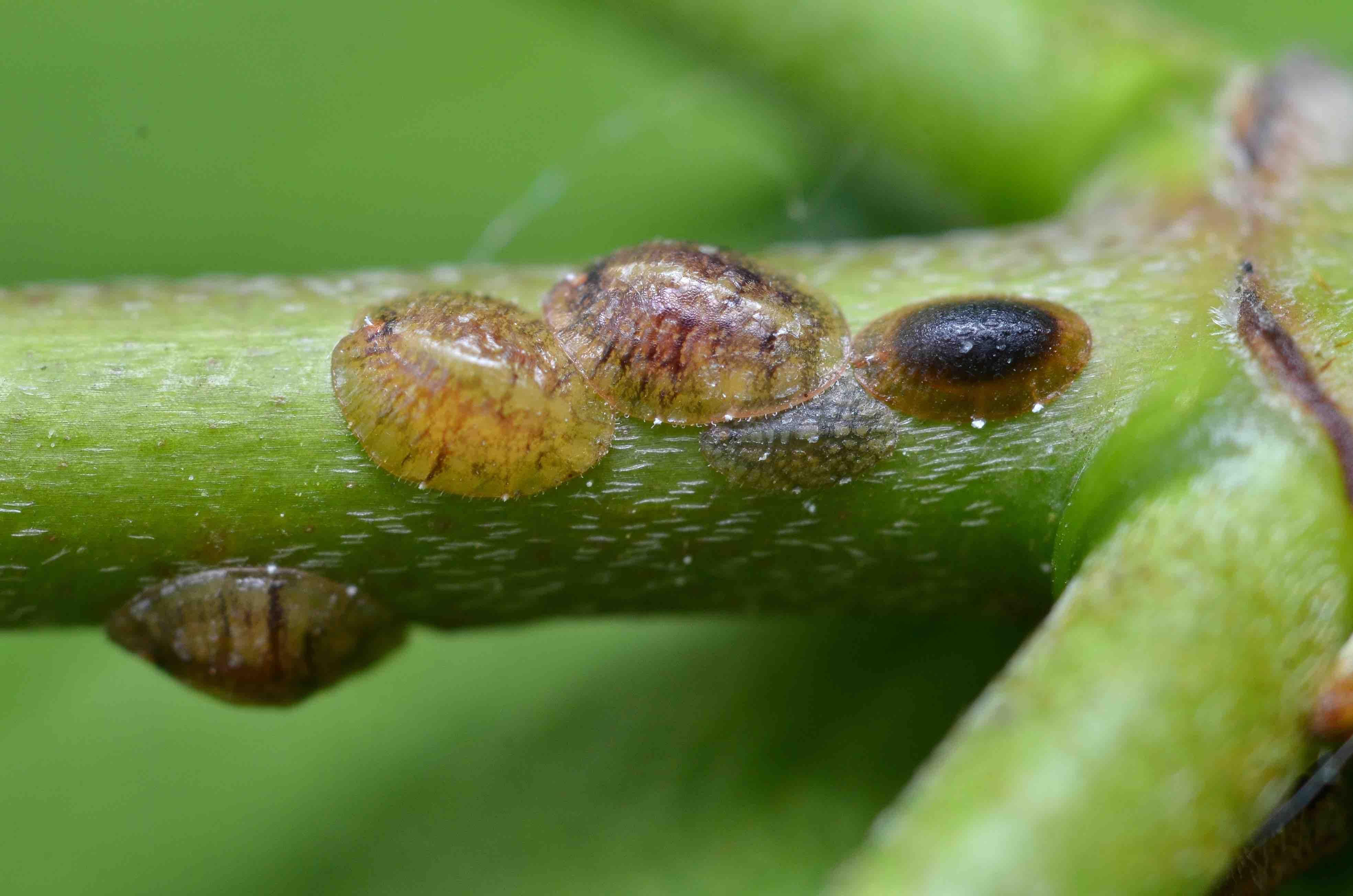 Mettez les nouvelles plantes en quarantaine – Jardinier paresseux