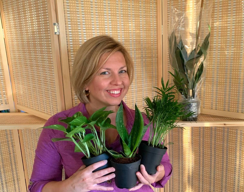 Femme tenant trois nouvelles plantes d'intérieur dans ses mains.