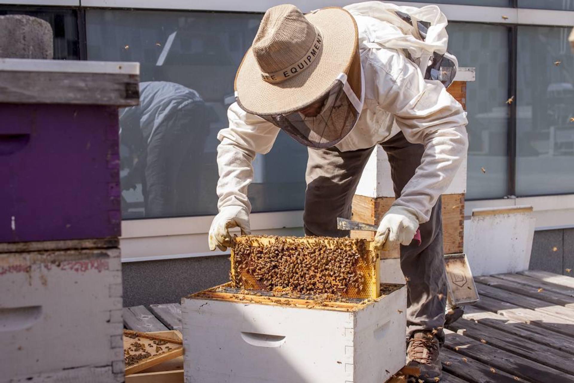 Apiculteur qui travaille sur une ruche sur le toit.