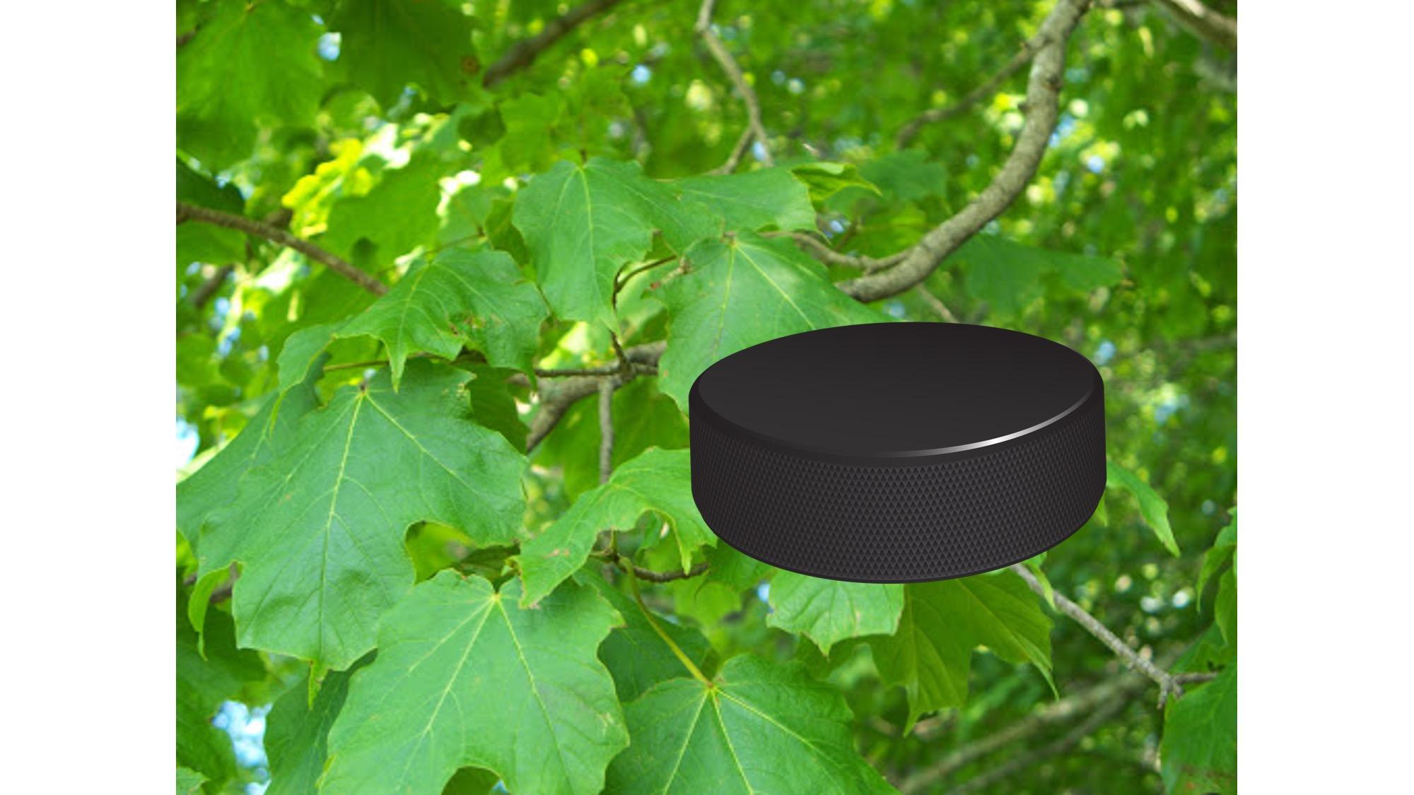 Rondelle de hockey placée devenant des feuilles d'érable.