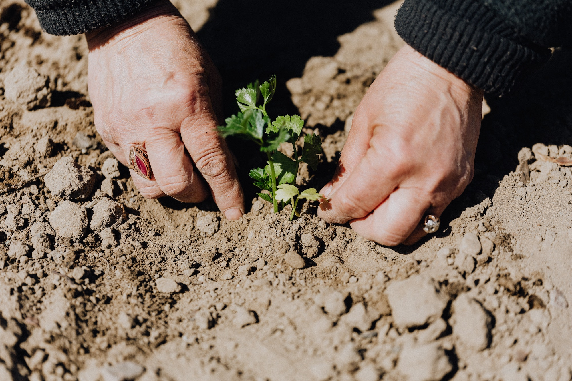 Mains plantant dans la terre