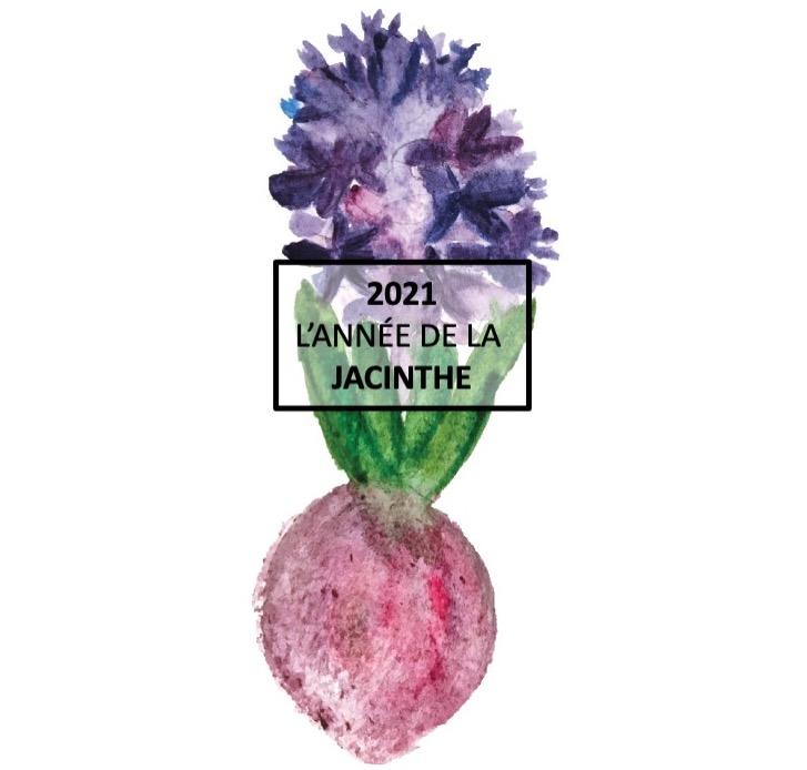 Aquarelle d'une jacinthe violette avec bulbe