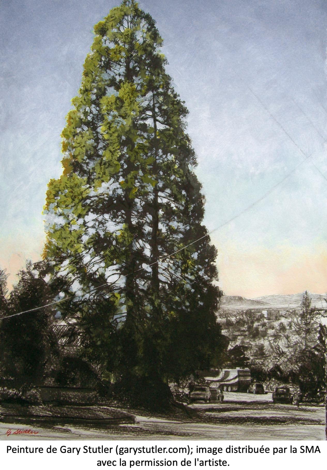 Peinture de séquoia géant.