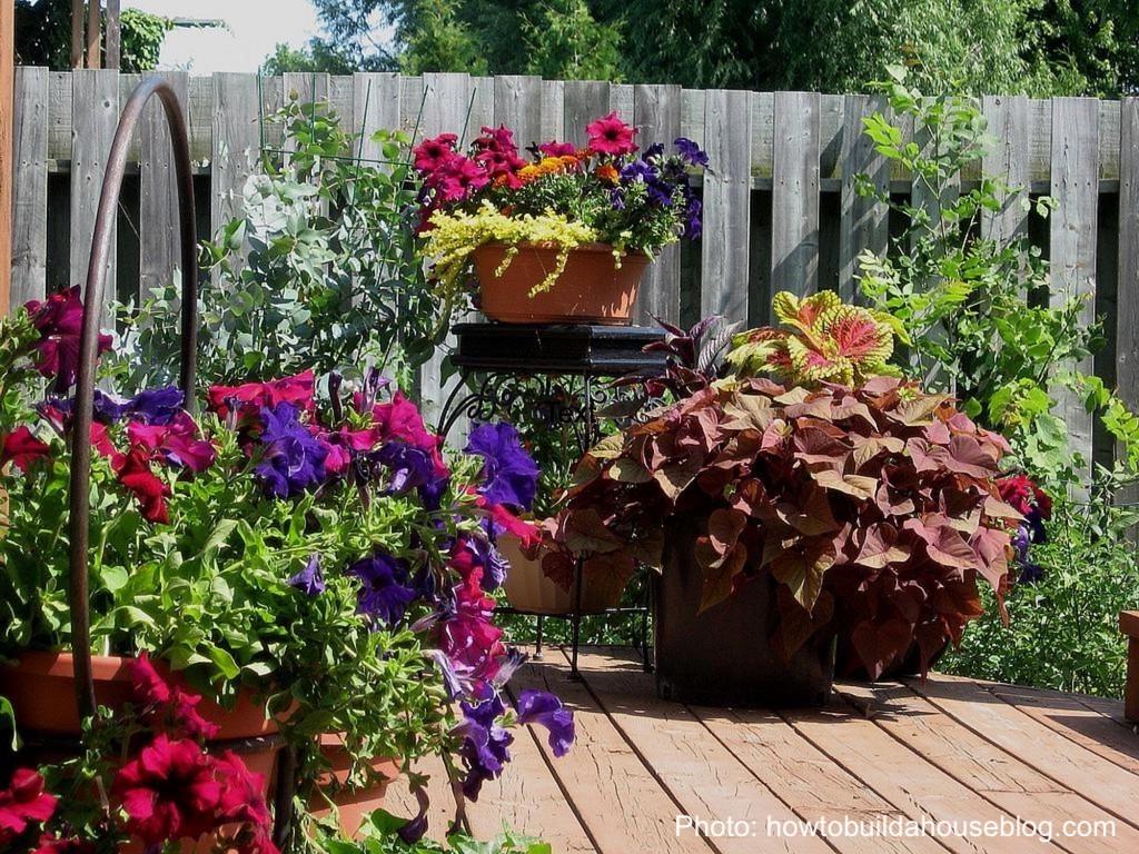 Divers bacs à fleurs sur une terrasse