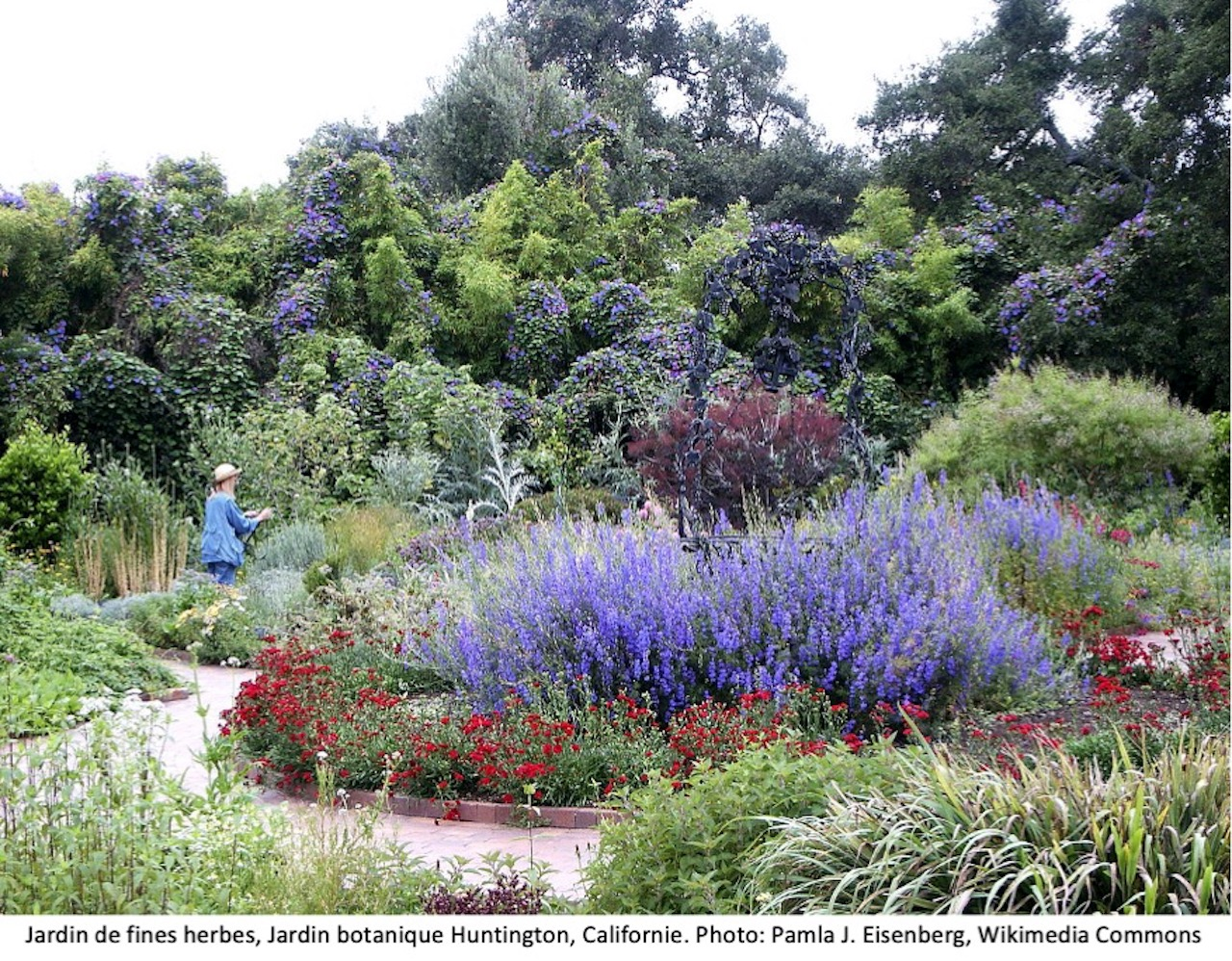 Jardin de fines herbes au Jardin botanique Huntington, San Marino, Californie