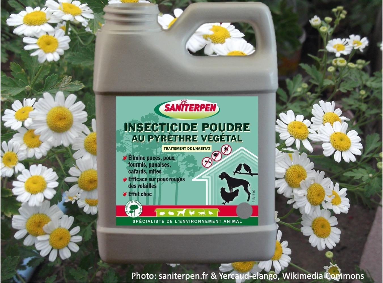 Insecticide à la pyréthrine avec fleurs de pyrèthres en arrière.