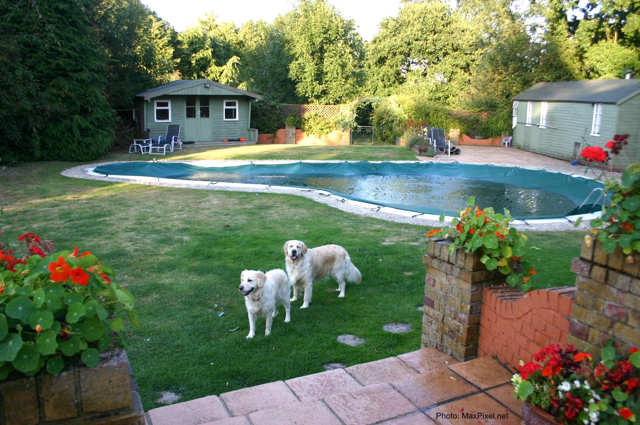 Piscine de cour arrière avec 2 chiens.