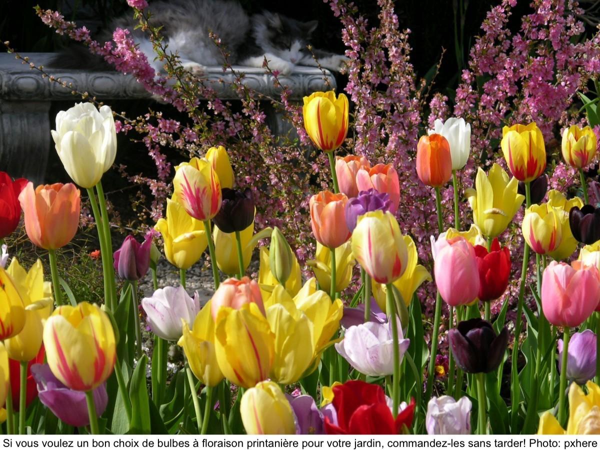 Jardin de tulipes