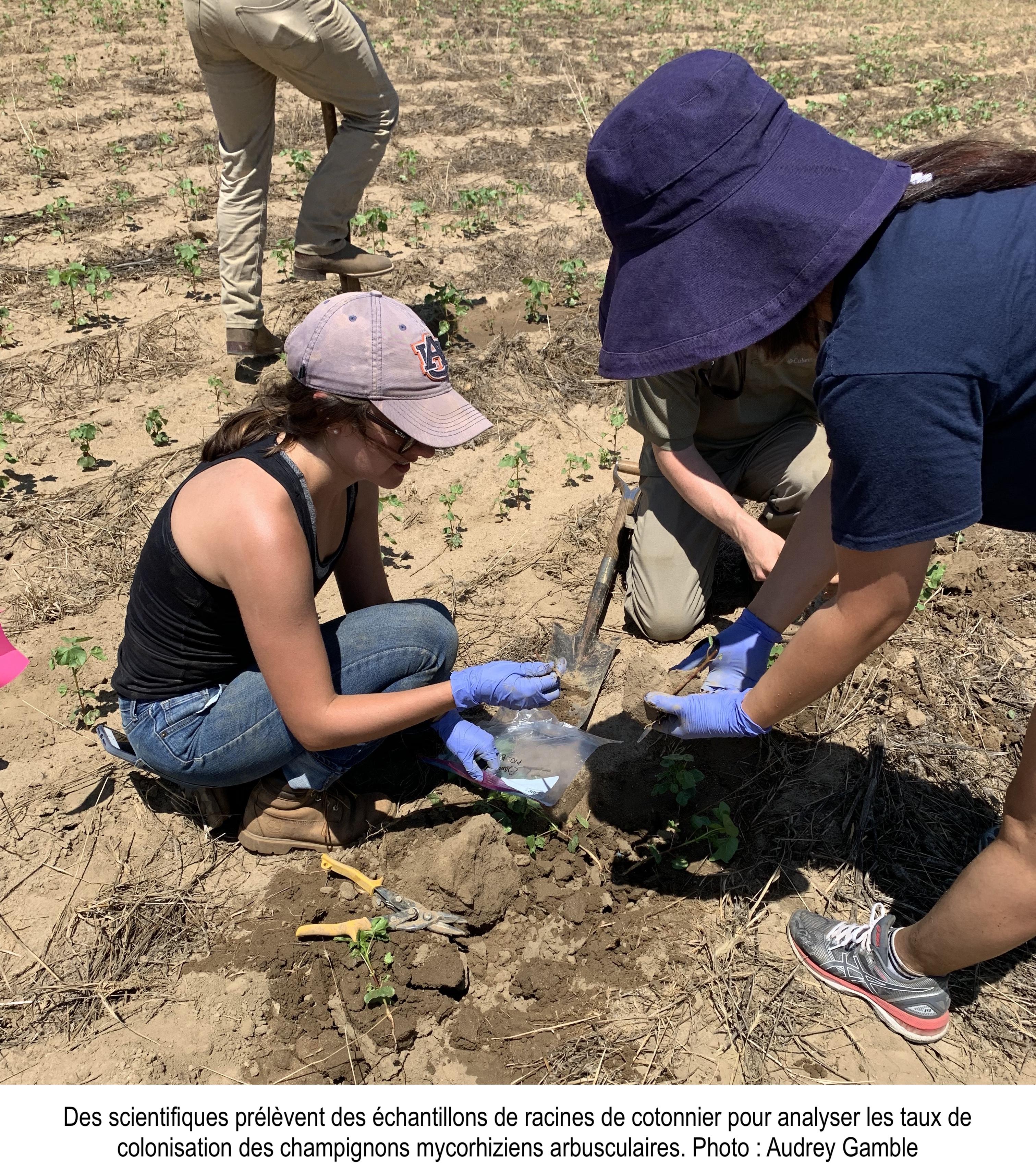 Scientifiques qui étudient les champignons mycorhiziens du sol.
