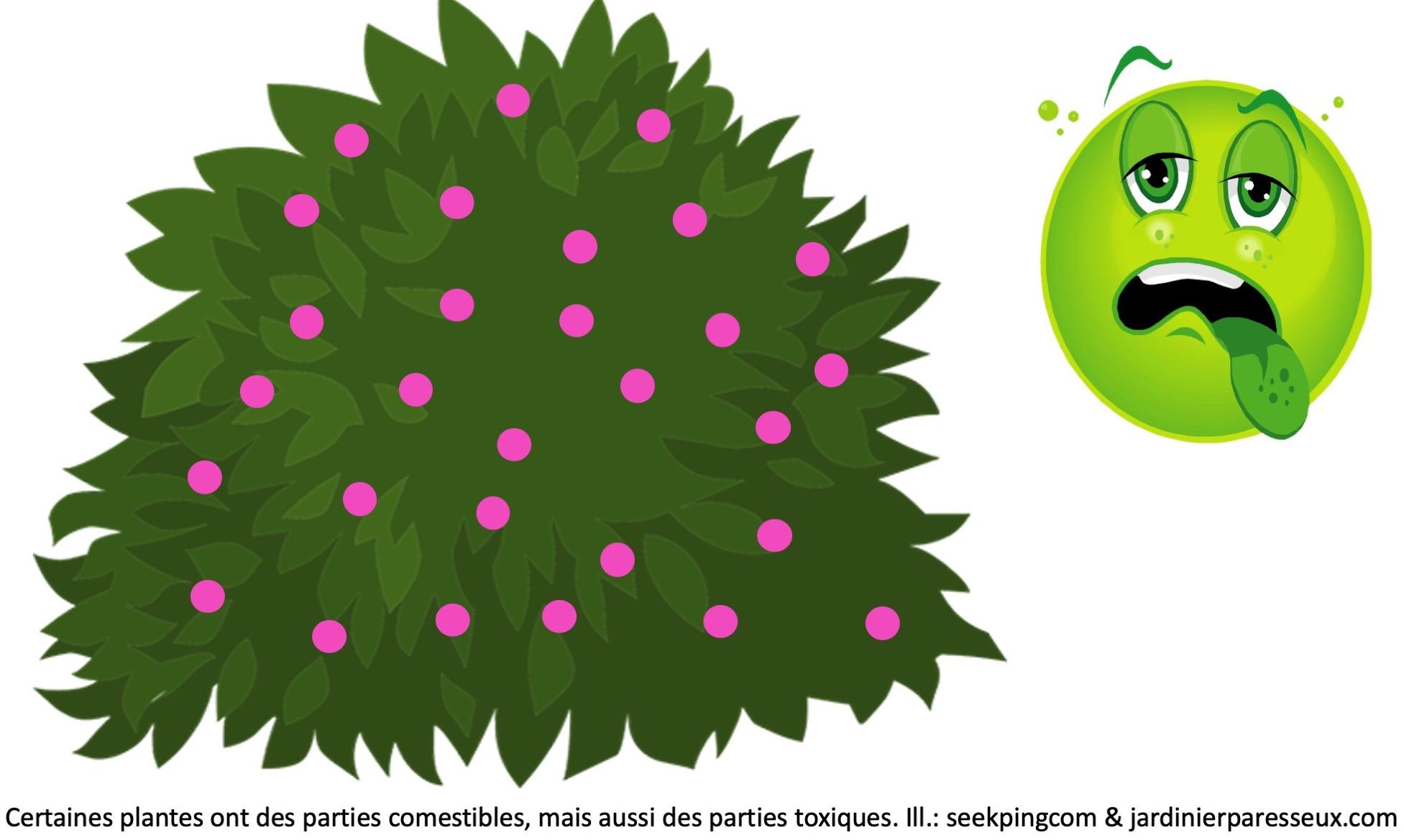 Arbustes avec fruits mauves, emoji vert qui paraît malade.