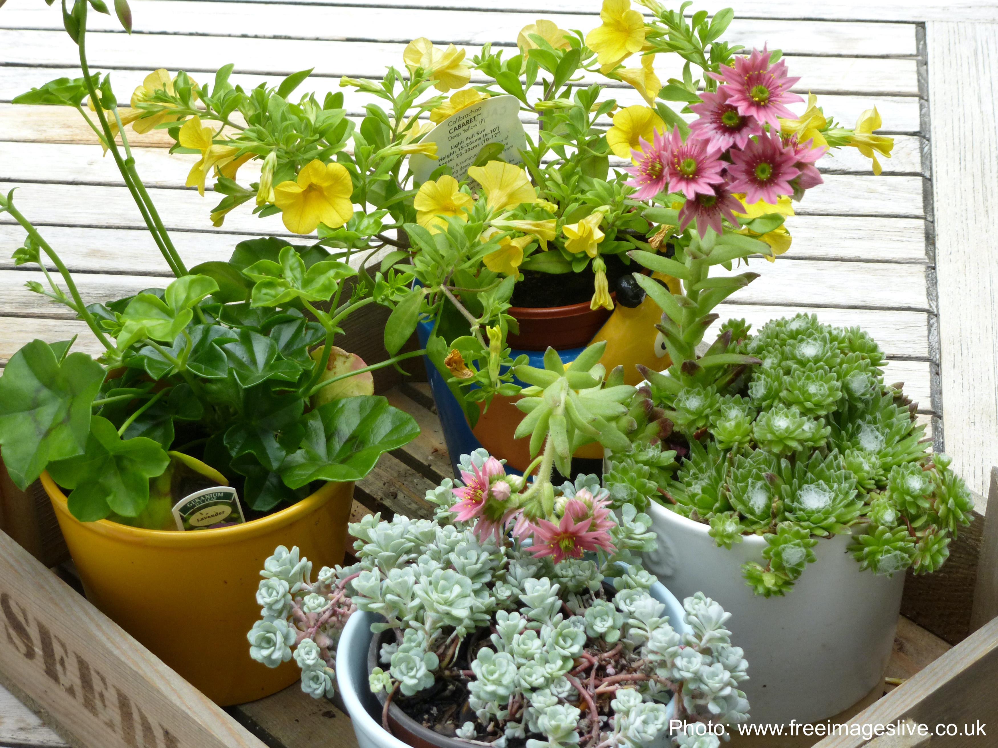 Plateau de plantes d'intérieur à rentrer pour l'hiver