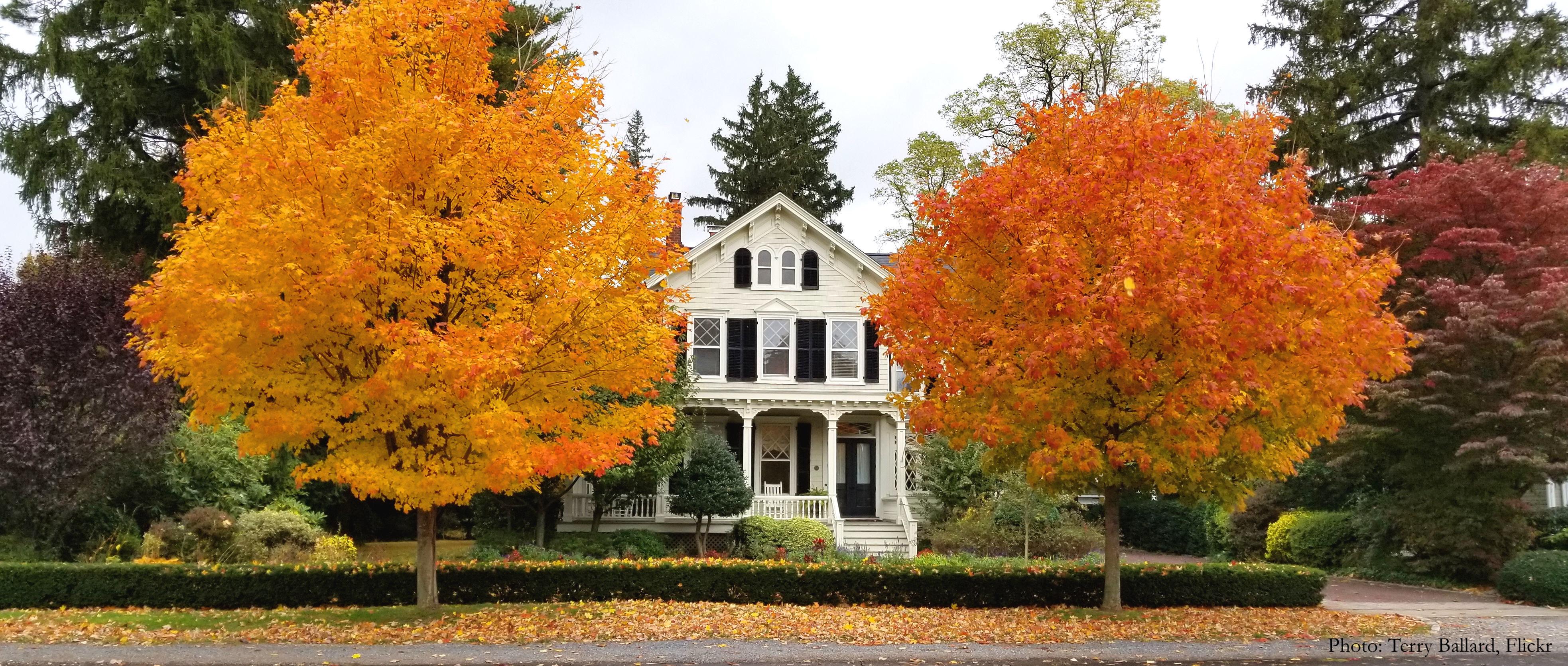 Maison à l'automne avec arbres à feuilles orange.